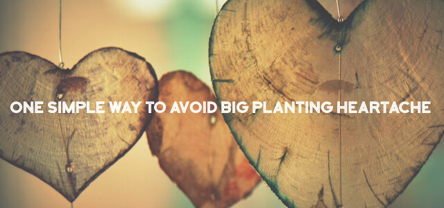 One Simple Way to Avoid Big Planting Heartache