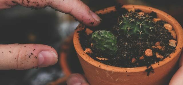 "Can We Still Call It ""Church Planting""?"