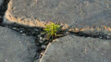 Plant or Grow? It's All a Part of Missional Discernment