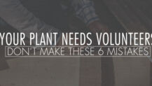 Your Plant Needs Volunteers: Don't Make These 6 Mistakes